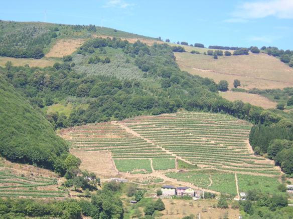 La cabana´l cachican rodeados de viñedos