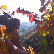 Viña en otoño