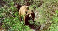 oso e Muniellos
