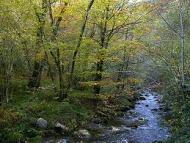 rio Muniellos
